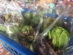 Bemwa Farm Lettuce