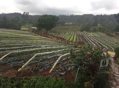 Bemwa Farm
